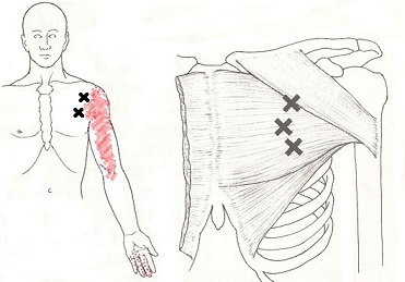 大胸筋2.jpg